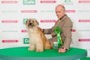 Weston Coyney dog owner Steve Phillips tastes Crufts success with...